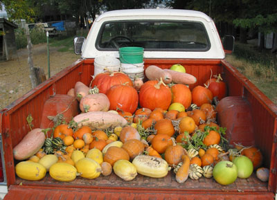 pickup truck with produce in the back